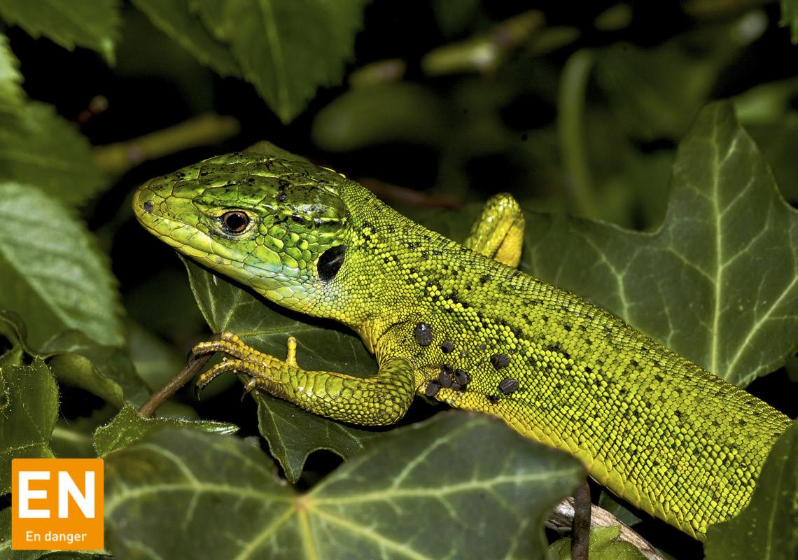 Reptiles (Alsace)
